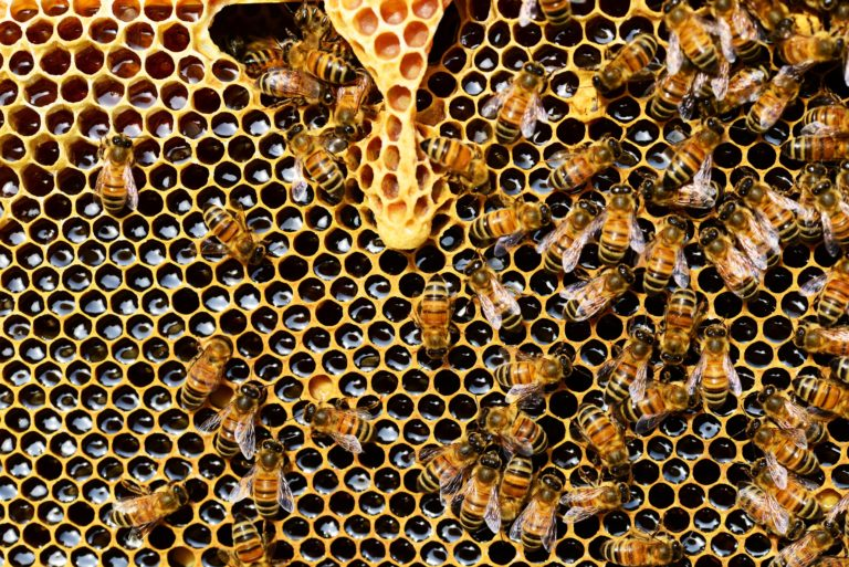 honeycomb-close-up-detail-honey-bee-56876