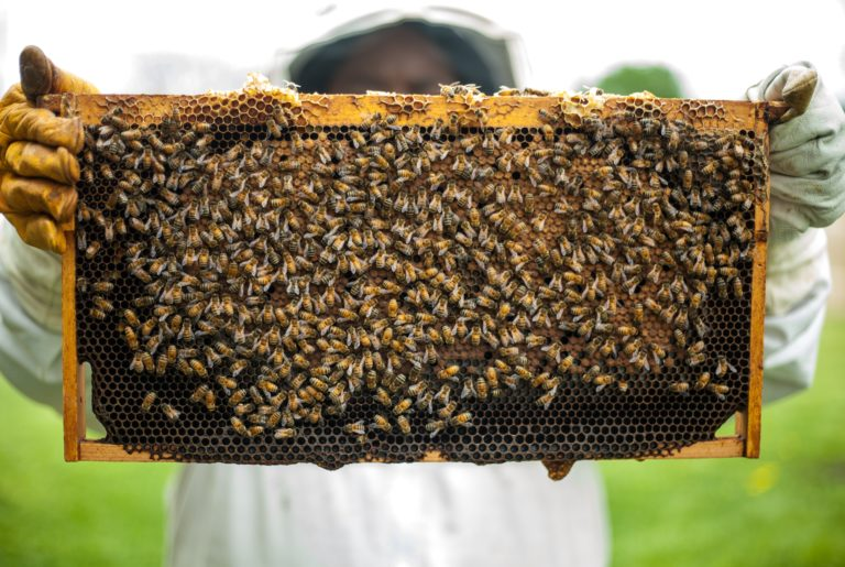 person-holding-honeybomb-with-honeybee-1406954