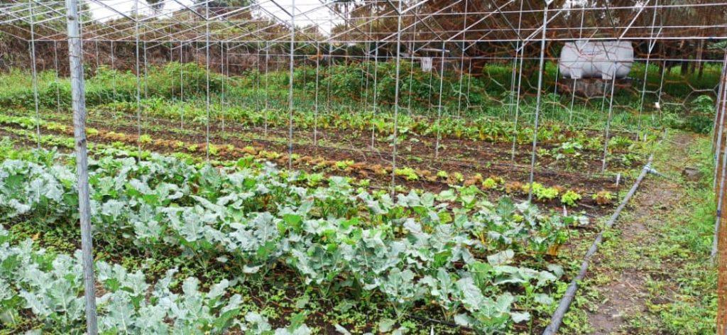 Organic garden under a greenhouse