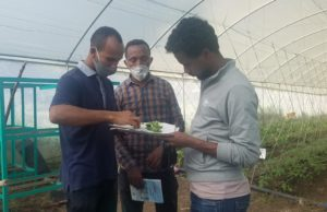 Teacher showing a plant to other adults
