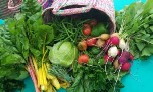 Colourful basket of organic vegetables and herbs