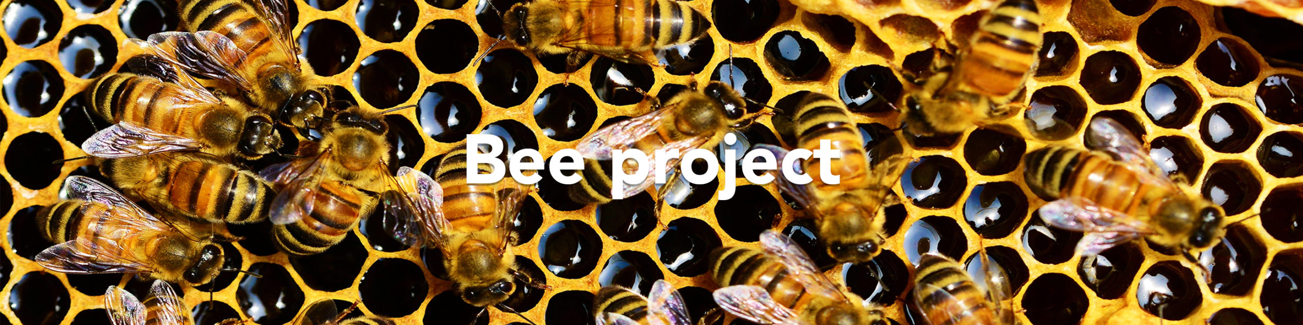 """Bees on a hive saying """"Bee project"""""""