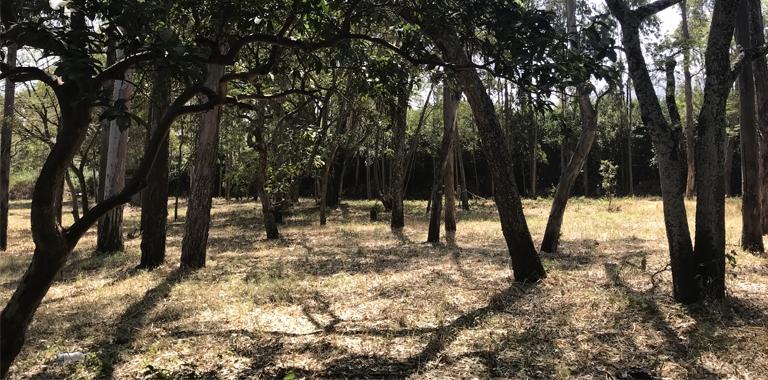 Trees in the school garden in Ethiopia