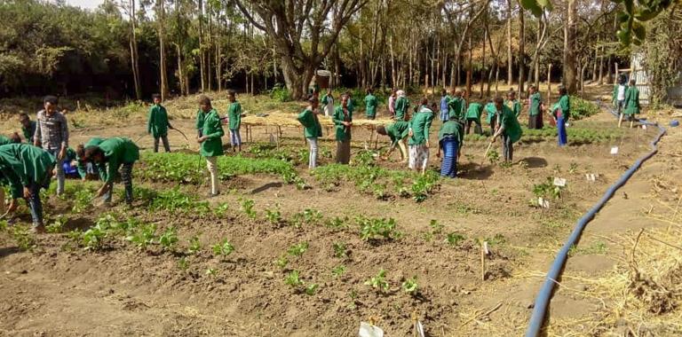 Students practicing organic farming