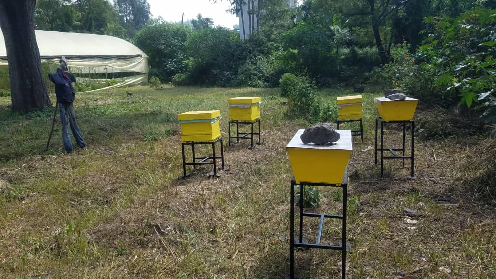 Five hives in the college garden, next to a greenhouse
